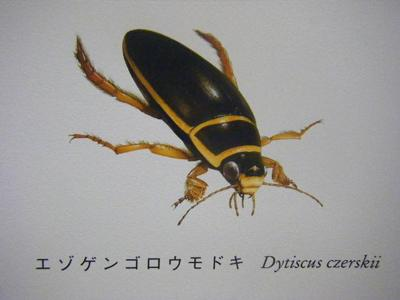 2010_08290121-4.JPG