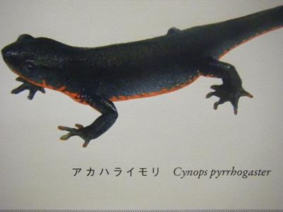 2010_08290122-5.JPG