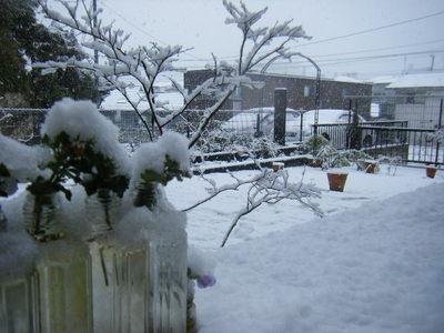 yuki2012-3.JPG
