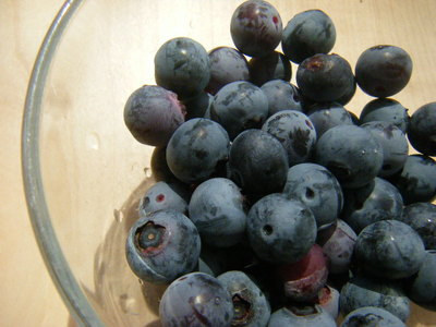 blueberry201208.JPG