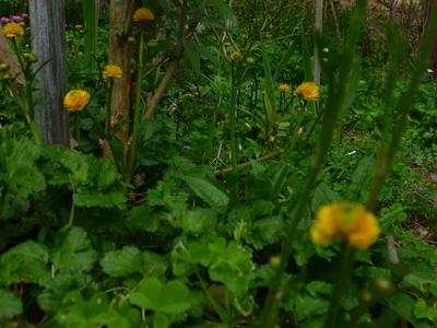garden1504-0.JPG
