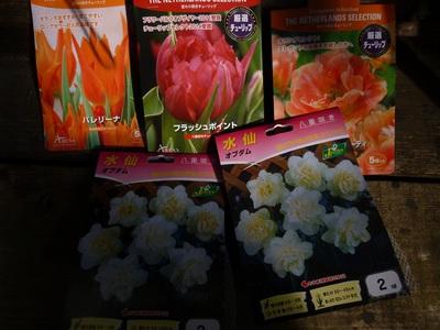 tulip2015.JPG
